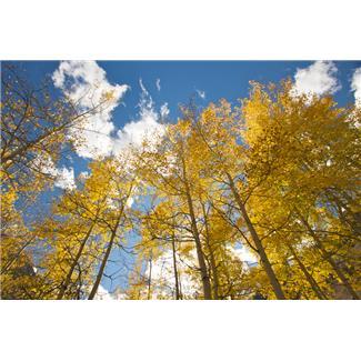 秋の木々と雲